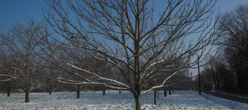 Châtaigneraie d' Eguzon sous la neige